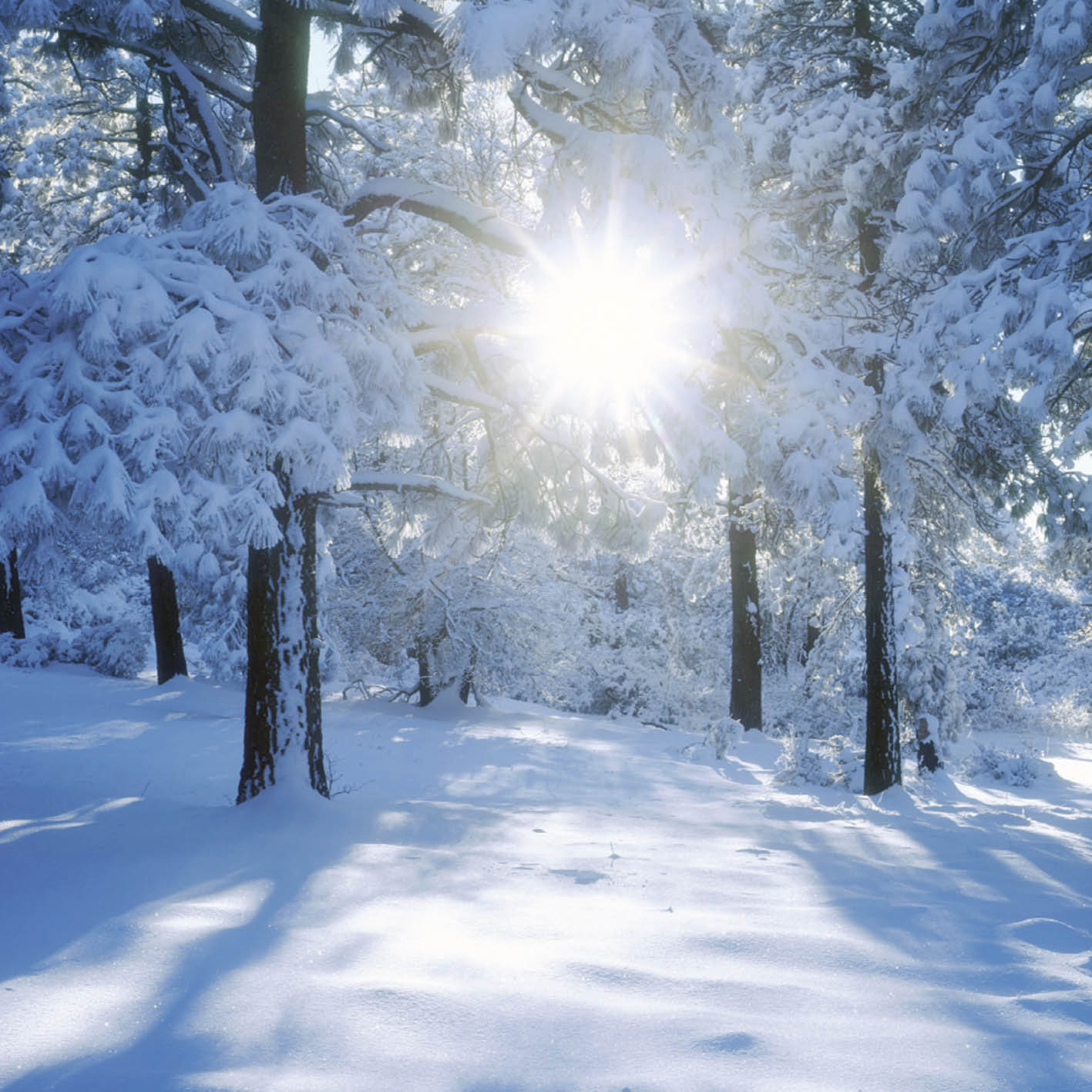 Winter Sunrise Christmas Card Charity Cards
