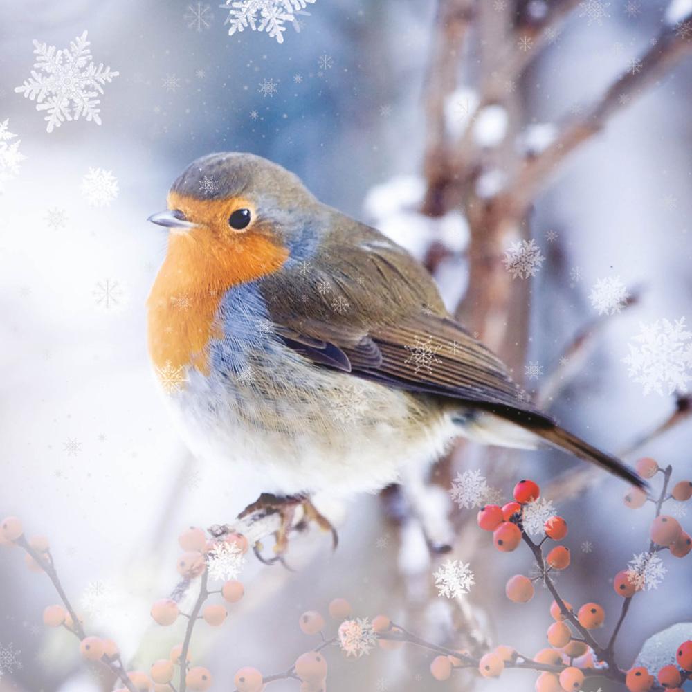 Winter Robin - Christmas Card