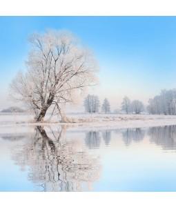 Frosty Tree - Christmas Card