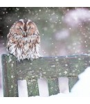 Charity Christmas Card - Cosy Owl