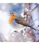 Charity Christmas Card - Winter Robin